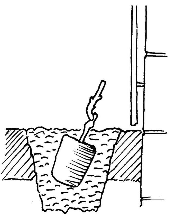 Weinrebe-Pflanzloch